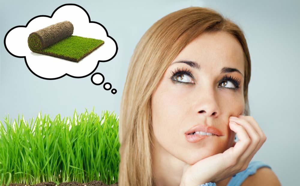 Посевной газон или рулонный