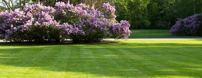 """Посевной газон: как вырастить и сохранить """"зеленый ковер"""""""